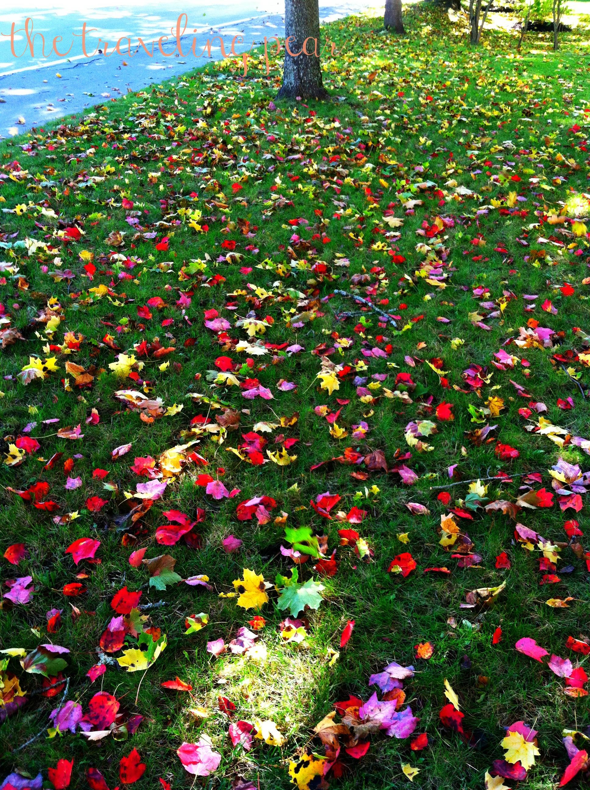 Nature/'s Confetti