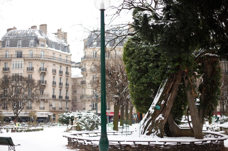 In Square Viviani is the oldest tree in Paris.  An acacia planted in 1601 and damaged during WWII went it was hit by a shell.