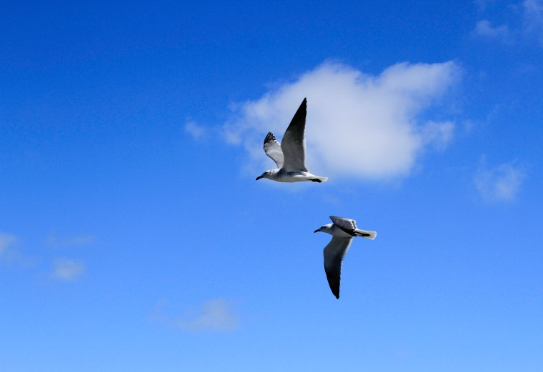 flying double