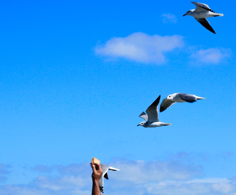 feeding the gulls