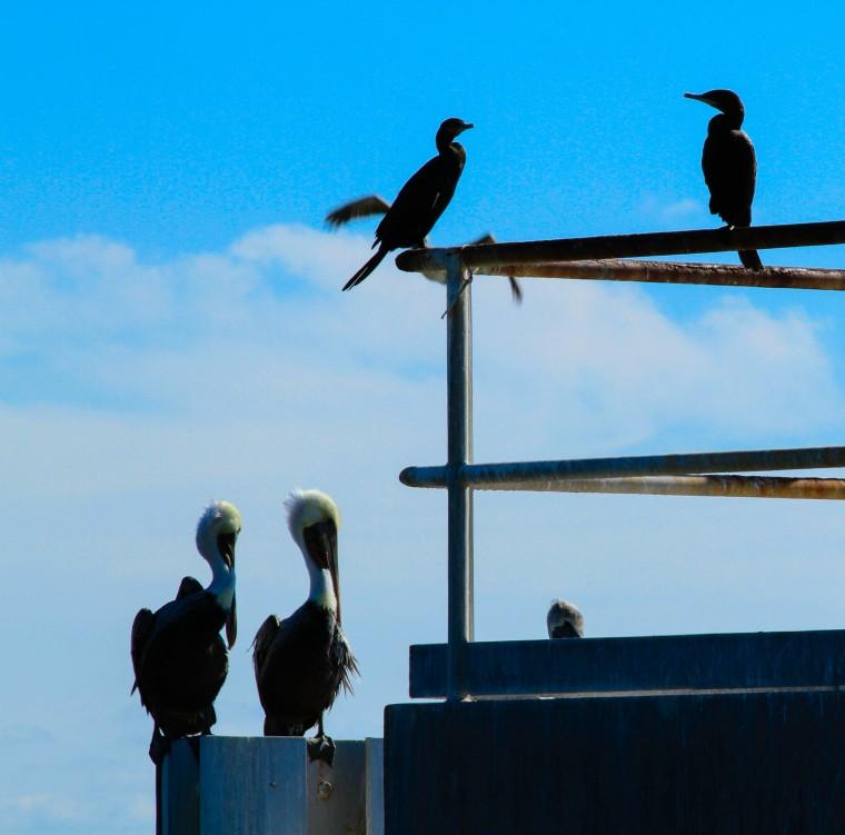 Birds in Pairs