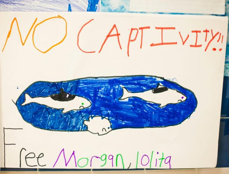 No Captive Orca
