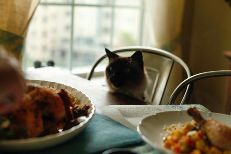Kitty at the table