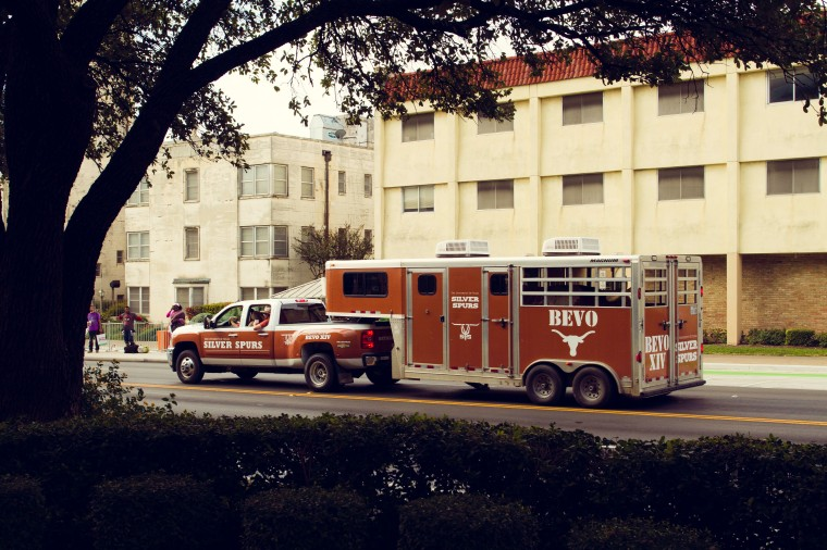 Bevo University of Texas