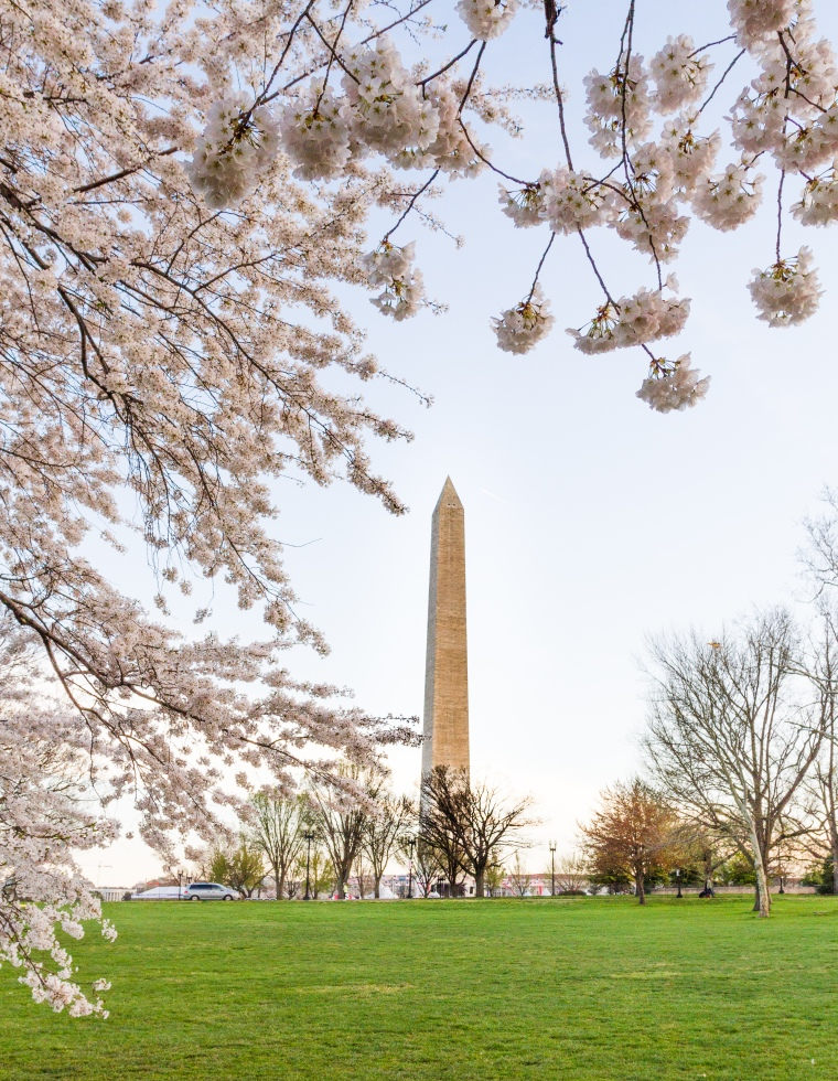 Washington Monument DC cherry blossoms