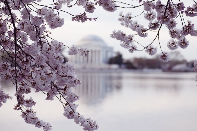 Jefferson Memorial DC cherry blossoms