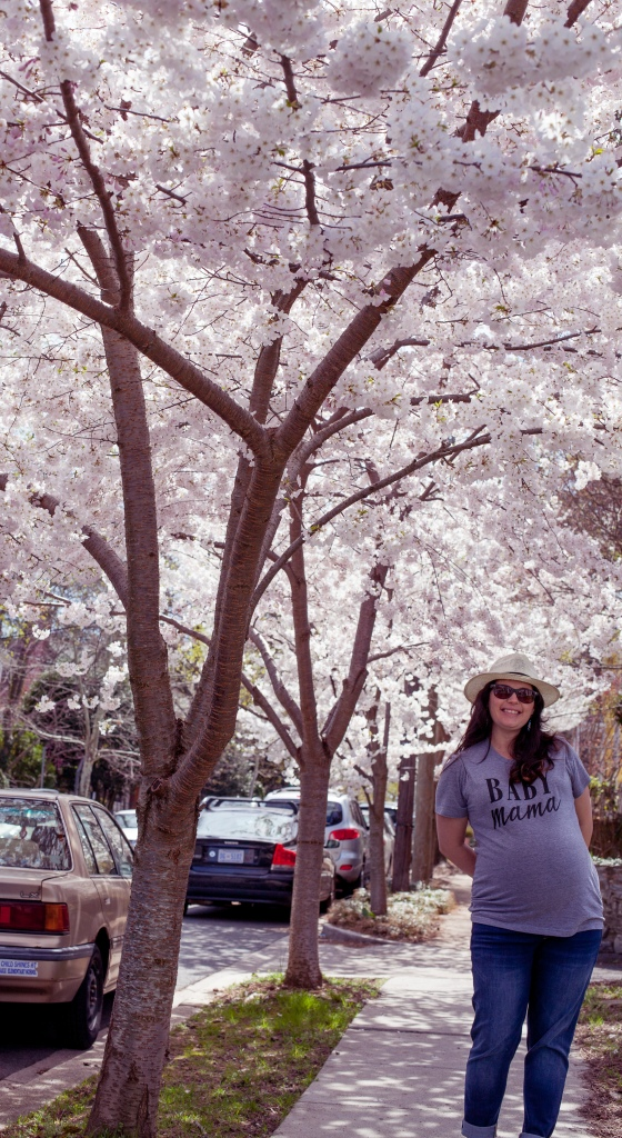 DC cherry blossoms maternity photoshoot