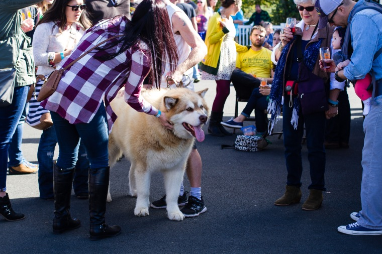 Alaskan Malamute... hands down the biggest dog we've EVER seen!